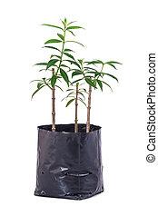 placera träd, isolerat