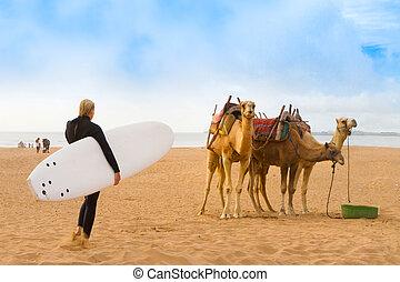 plage, afrique., maroc, essaouira