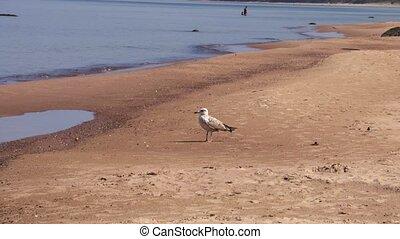 plage, albatros, jour ensoleillé