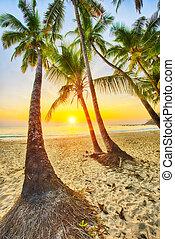 plage, antilles, coucher soleil