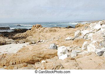 plage, caillou, californie, oiseau, rocher