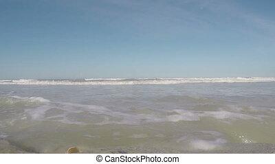 plage, chênes, fl, huit, washington