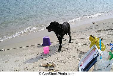 plage., chien