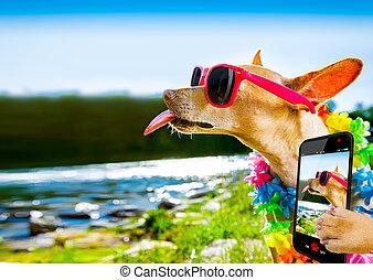 plage, chien, selfie, vacances été