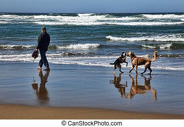 plage, chiens, homme