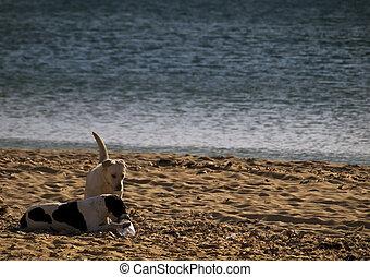 plage, chiens