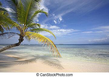 plage, cocotier, paradis