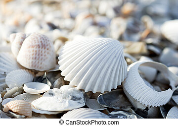plage, coquilles