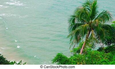 plage., coup, négligence, sur, arbres, exotique, paume, vidéo