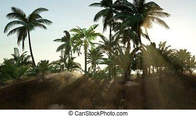plage, ensoleillé, exotique, jour