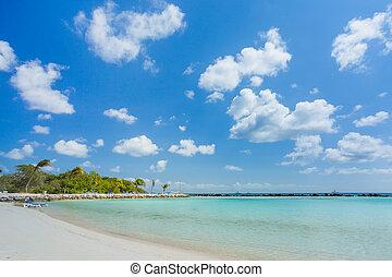 plage, flamant rose, aruba, île