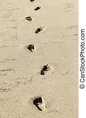 plage, humain, encombrements