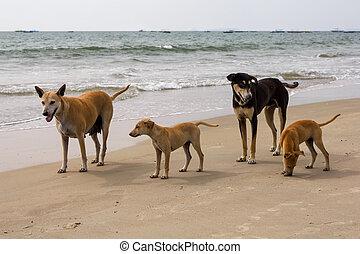plage, inde, goa, chien famille