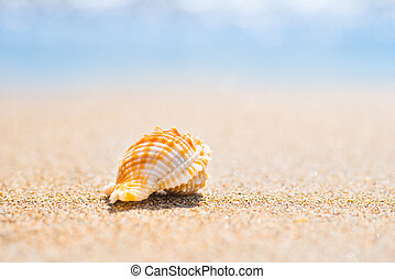 plage, macro, sable, coquille, coup