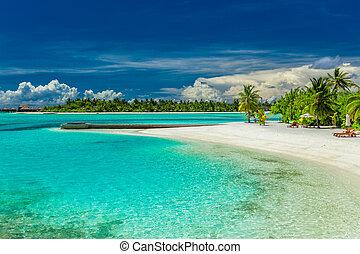plage, maldives, île, sur, arbres, paume, lagune, plage, sablonneux, umbrelllas