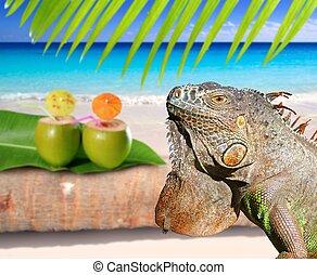 plage, noix coco, iguane, antilles, mexique