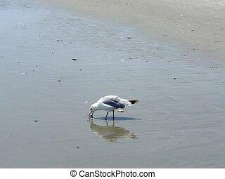plage, oiseau
