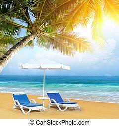 plage, palmier, exotique