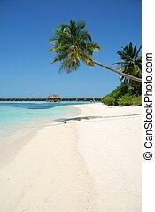 plage, paradis, à, palmier, pendre