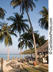 plage, paume, exotique, arbres, tables