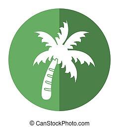 plage paume, symbole, arbre, ombre