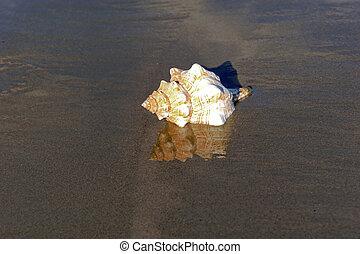 plage, réflexions