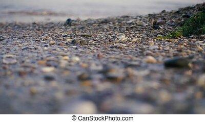 plage, rouleau, sablonneux, vagues