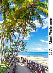 plage, route, paradis