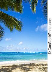 plage, sablonneux, paume, hawaï, arbres