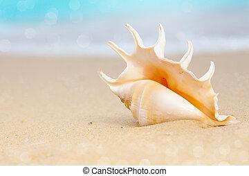plage, seashell, sable
