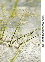 plage, tête, chauve, island., herbe