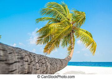plage tropicale, à, palmier
