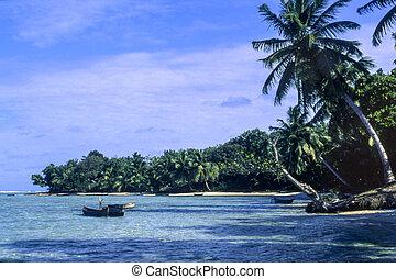 plage tropicale, à, paumes