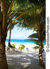 plage tropicale, art, mer caraïbes