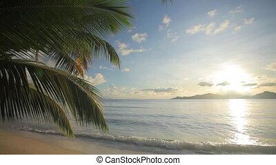 plage tropicale, coucher soleil, juste, avant