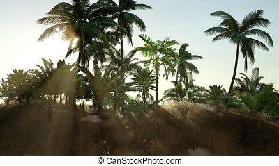 plage tropicale, jour ensoleillé