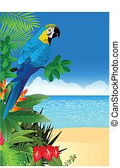 plage tropicale, macaw, dos, oiseau