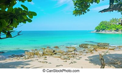 plage tropicale, océan