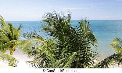 plage tropicale, palmiers