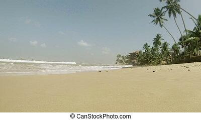 plage tropicale, paume, arbres.