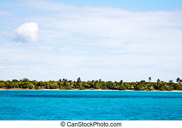 plage tropicale, paumes, océan