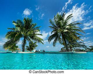 plage tropicale, piscine