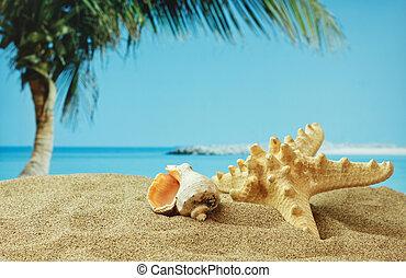 plage tropicale, sablonneux, etoile mer, côte