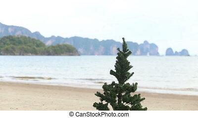 plage, type, arbre, noël