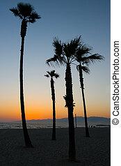 plage, venise, coucher soleil