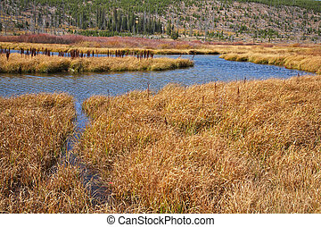 Plain in park Yellowstone