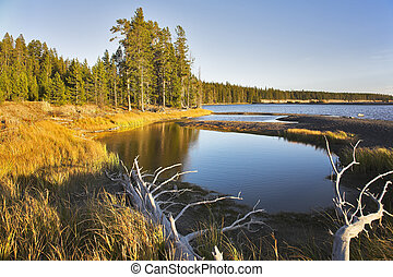 Plain in Yellowstone national park