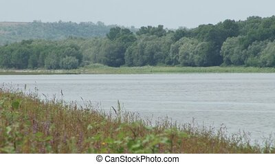 Plain River Shore with Herbage - Plain river shore with some...
