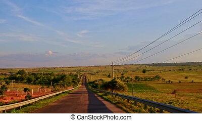 Plain Sunny Rural Landscape with Farm Rare Trees against Sky...