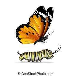 Plain Tiger butterfly and caterpillar - Vector realistic...
